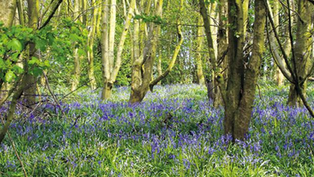 Crann magazine has stuck firmly to its core values of 'planting trees and protecting woodlands'. For 21 years, the magazine has been actively campaigning for the planting of more diverse species and the establishment of high-value, sustainably managed woodlands. Living Woods'  appeal is to those of us who have a more 'hands on' approach and enjoy woodland crafts, gathering wild food and a multitude of ways of learning about trees and wildlife