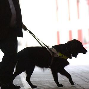 High-tech glasses could take the place of guide-dogs within two years, says scientist