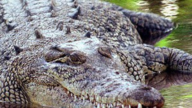 A saltwater crocodile has been caught after wandering into a family home in Australia