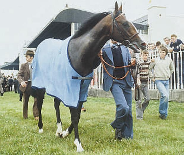 Shergar pictured at the Irish Derby at the Curragh in 1981. The horse was kidnapped two years later
