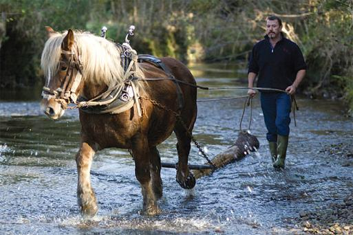 GOOD IN THE WET: Tom Nixon and his horse 'Chincha' gather up more felled trees in watery terrain in Glengarriffe National Park in west Cork