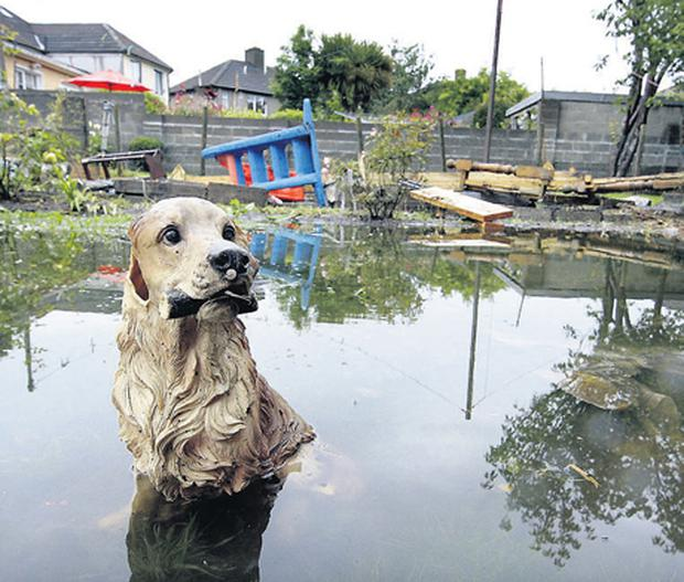 This ornamental golden retriever was among the sights that bemused Dublin residents awoke to after a record two weeks of rain fell in just one hour