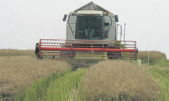 A nice dry harvest would be appreciated
