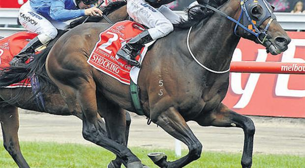 Shocking passes Crime Scene as they approach the finish line of the Melbourne Cup at Flemington - the Australian press is bullish about Zoustar's chances at the weekend