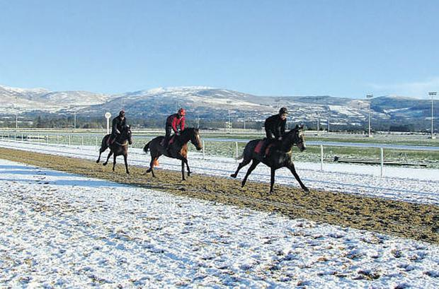 A group of horses galloping up a harrowed section of Dundalk's all-weather track yesterday