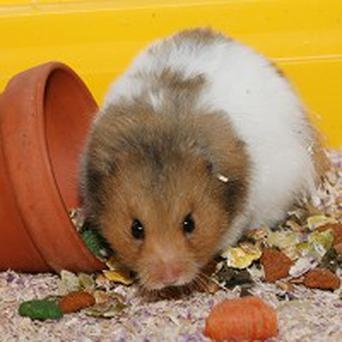 A mother has been jailed for forcing her son to kill his pet hamster as a punishment for poor results at school