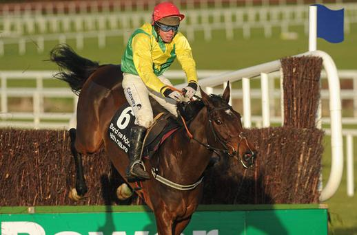 Sizing Europe and Andrew Lynch will aim to follow up their Leopardstown win at Christmas in the Irish Independent Arkle Chase at Cheltenham on March 16