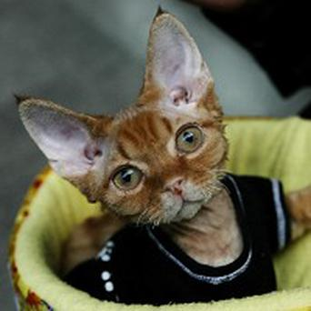 Woman on trial in the US accused of piercing kittens to sell on the internet