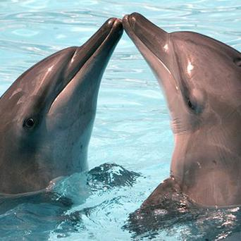 A trick bottlenose dolphins use to keep their brains fed with energy could lead to a diabetes cure