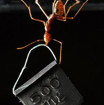 Asian weaver ant picture has won first prize in the science photography exhibition