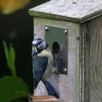 A bird box which resembles a speed camera has helped to stop traffic speeding