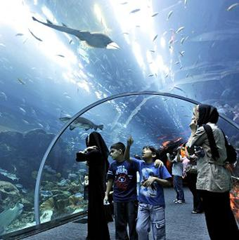 A large section of the Dubai Mall has been closed due to a shark tank leak (AP)