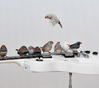 Finches and a guitar feature in the new art installation