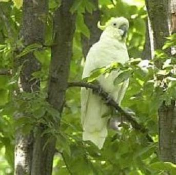 A 52-year-old woman pleads guilty to exchanging two children for cockatoo and cash