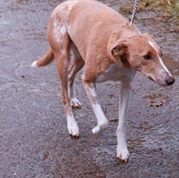 A dog owner has lost his driving licence after walking his lurcher while driving his car