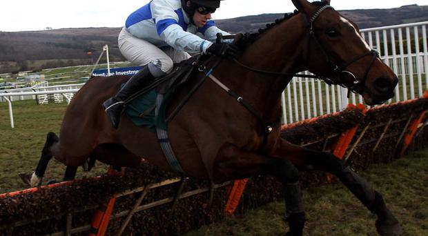 Trainer Robin Dickin has reported that Restless Harry is in tip-top shape ahead of the Cheltenham festival. Photo: Getty Images