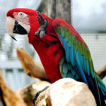 A US bank has apologised after a contractor allegedly seized a woman's parrot