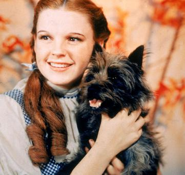 Actress Judy Garland, as Dorothy Gale, holding Toto in the orginal Wizard of Oz. Photo: Getty Images