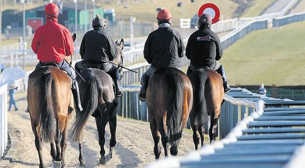 Some of the early arrivals from the Willie Mullins yard make their way to the gallops at Cheltenham yesterday