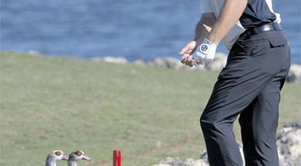 Padraig Harrington gets his ducks in a row before playing a shot from rocks on the tenth fairway at the WGC-CA Championship at TPC at Doral in Miami