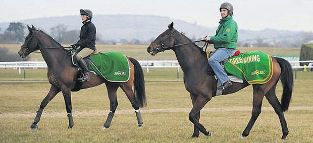 Sizing Europe (left) with Rosemary Connors and Sizing Australia under Henry de Bromhead on the gallops at Cheltenham