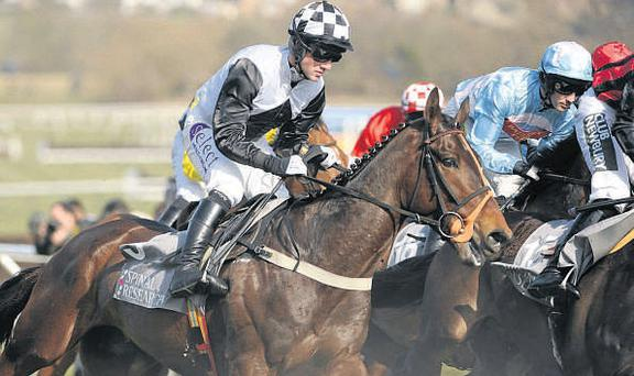 Dunguib, with Brian O'Connell up, started the Supreme Novices Hurdle as favourite, but finished a disappointing third