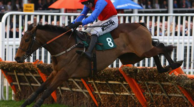 Quevega could tackle the boys at Aintree next month Photo: Getty Images