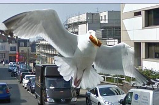 A picture from Google Street View features a seagull with part of its wing 'missing'
