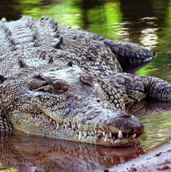 A Malaysian golfer who was bitten by a crocodile during a game was paid 8,537 pounds by the club