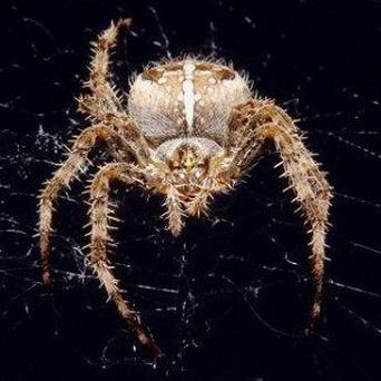 Fear of spiders is the biggest phobia among young people