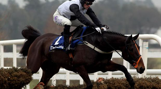 Philip Fenton says Dunguib's Punchestown target will be dictated by the ground. Photo: Getty Images
