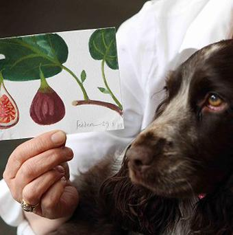 Cocker Spaniel Daisy chewed a postcard by Royal Academician Mary Fedden