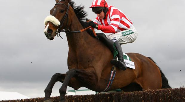 Forpadydeplasterer, finished runner-up to Big Zeb under Tony McCoy in the Champion Chase at Cheltenham, has decent prospects of ending the season on a winning note at Punchestown today with Barry Geraghty in the plate. Photo: Getty Images
