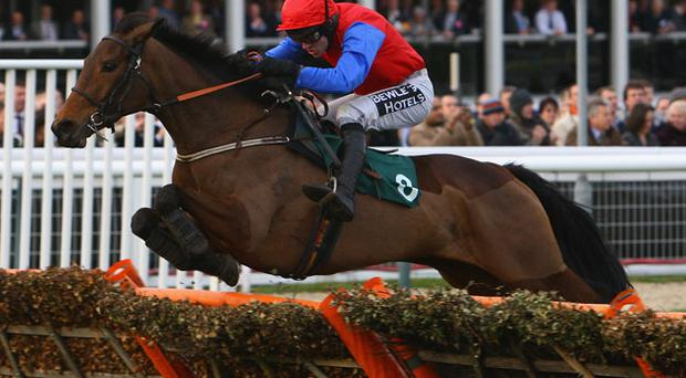 Quevega a genuine contender for the ladbrokes.com world series hurdle. Photo: Getty Images