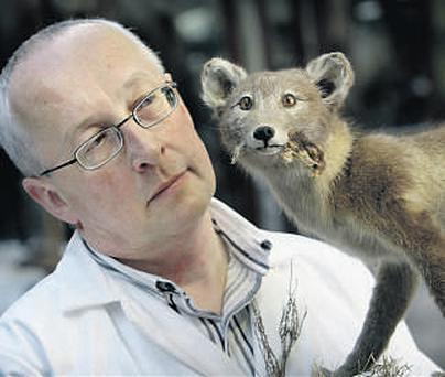 Nigel Monaghan, keeper of the Natural History Museum, with an arctic fox