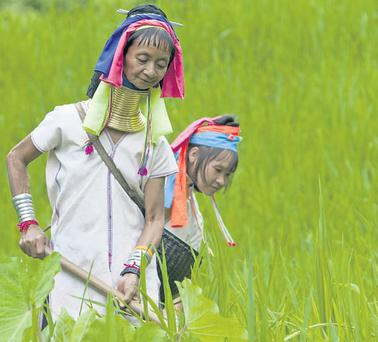 The northern hills of the country are home to tribes such as the Padaung, known as the 'long necks' because of the numerous brass rings the women wear around their necks;