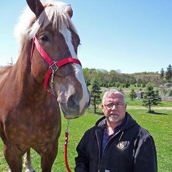 Jerry Gilbert stands next to Big Jake - the Guinness World Record holder for the world's tallest living horse