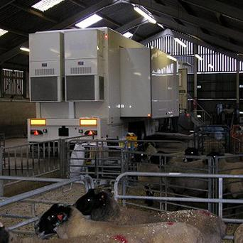 A mobile CT scanner is being used on sheep to improve the quality of meat they produce, scientists said