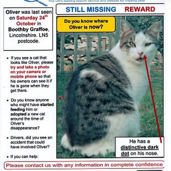 A poster of Oliver, a tabby cat who has been missing from his home in the Lincolnshire village of Boothby Graffoe since last October