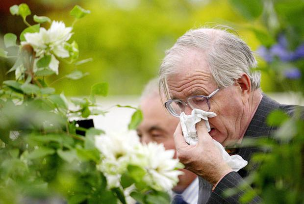 Hay fever sufferers can be impaired behind the wheel. Photo: Getty Images