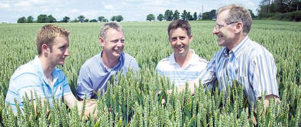 DISCUSSING MATTERS: (from left) Denis Crowley, adviser Ciaran Collins, host farmer John Crowley, Renny, Ballyhooly, Co Cork, and Teagasc area manager Jerry McCarthy check out a crop of JB Diego winter wheat at the Teagasc BETTER crop walk.