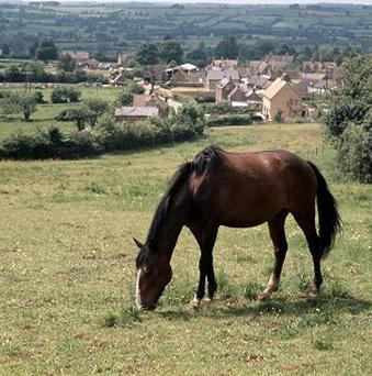 Police are investigating after 'spiked' apples were planted in a field of horses in East Sussex