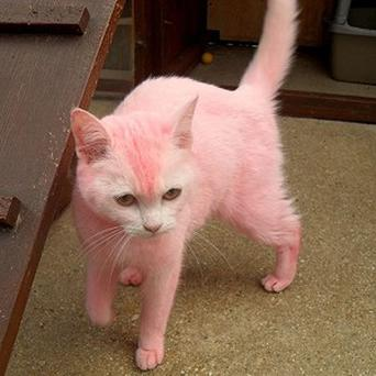 The cat, named Pink by rescue staff, was seen being thrown into a garden