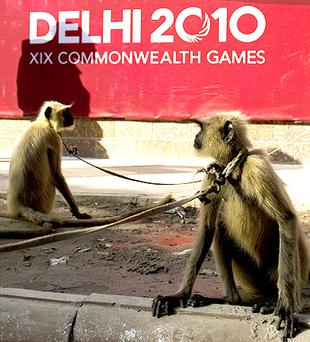 Langur monkeys outside Dhyan Chand National Stadium in New Delhi. Photo: Getty Images