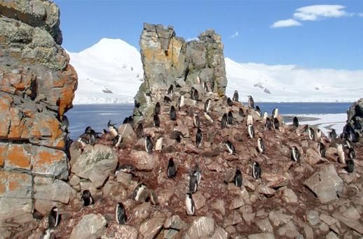 The penguins on Half Moon Island, Antarctica, as seen on Google Street View. Picture: Google