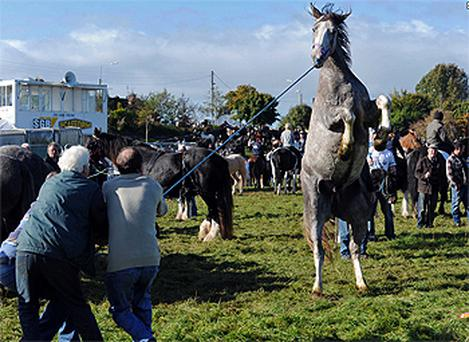 A horse tries to bolt as the owner and helpers hold on