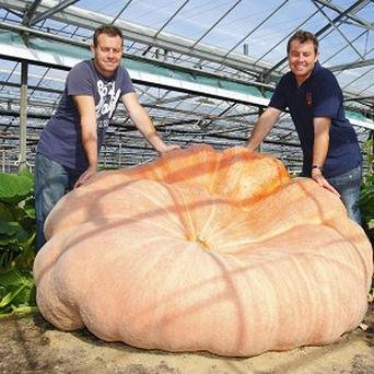 Ian (left) and Stuart Paton with their giant pumpkin which they hope will break the world record when officially weighed on Saturday