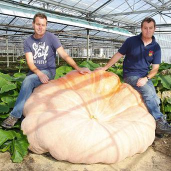 Ian and Stuart Paton in their nursery in Hampshire with their monster pumpkin