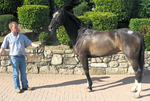Lot 115, a four-year-old dark bay filly by Ekstein, out of a Cloughjordan Boy mare, sold for €6,100 at Cavan in June