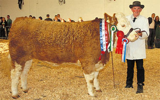Peter O'Connell, Mallow, Co Cork, shows off the overall champion Simmental